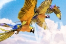 Macaws-in-Flight