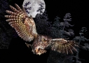 Owl in Moon