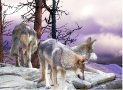 Three Wolves on Cliff