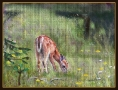 fawn-in-meadow