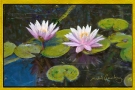 pink-water-lilly