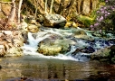 Mountain Stream Spring